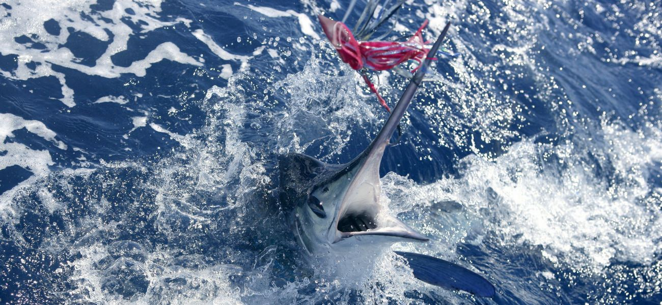 fishing rod fish water fun yacht play sailing catamaran seychelles cat luxury holidays charter