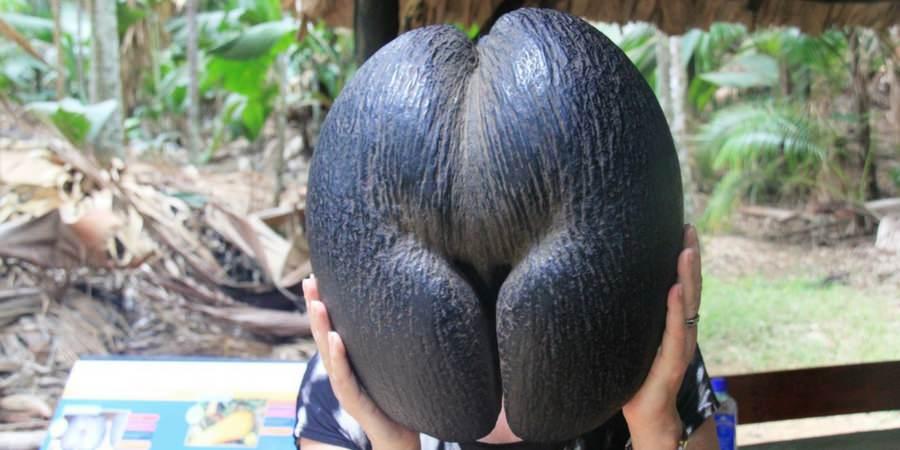 coco de mer seychelles charter luxury catamaran flora palms
