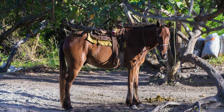 horse riding horseback seychelles beach water ocean romantic ride