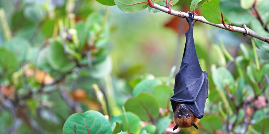 bat fauna flora seychelles hike hiking luxury charter catamaran sailing